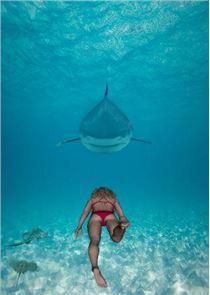 SHARK ADVENTURE 3