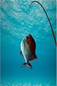 Fishing Challenge Superstars 1