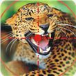 Wild Animal Hunting apk
