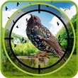 Birds Hunter in Jungle apk