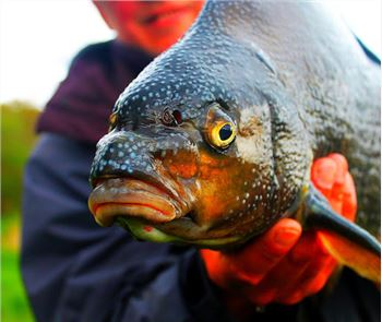 All Fishing: Fisherman 4