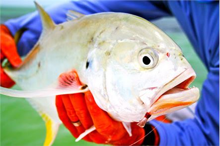 All Fishing: Fisherman 1