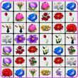 Onet Flowers apk